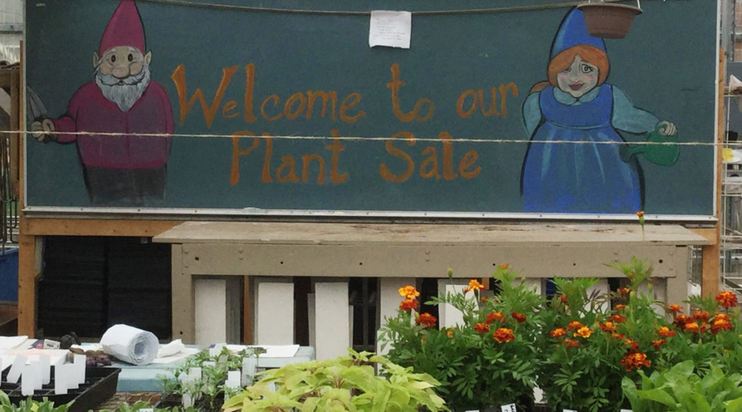 Plants and the chalkboard showing Farmshed's plant sale. Photo by Jen Dolan